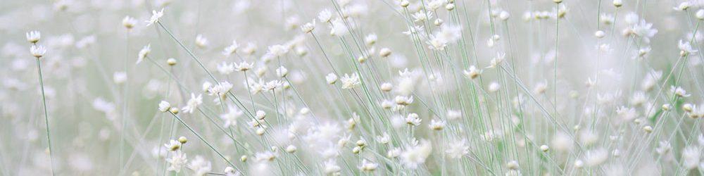 Naturopathie & Vitalité
